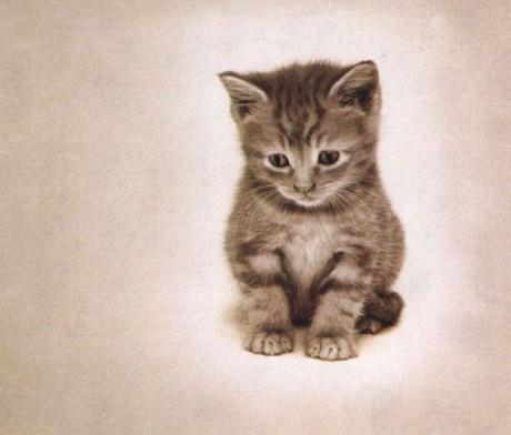 www čierna mačička obrázky